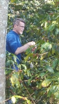 Rick Bayless caught picking coffee, Coatepec, Ver.